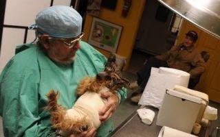 Открытие ветеринарной клиники: перспективы и тонкости
