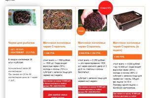 Разведение червей дома: технология выращивания, где купить
