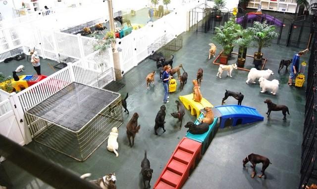 Бизнес-план гостиницы для животных: организация и выгода