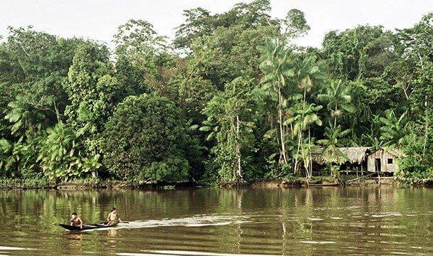 Джунгли Амазонки: таинственный мир влажных тропических лесов