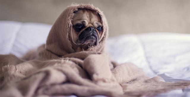 Разведение собак: как правильно создать прибыльный бизнес