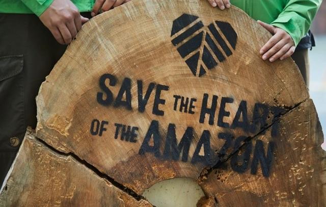 Статистика вырубки лесов: данные по разным странам