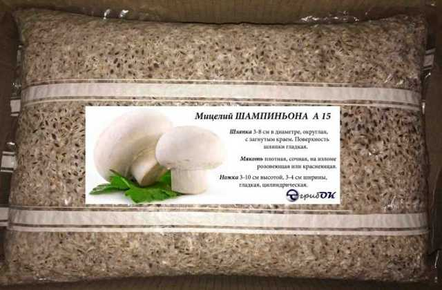 Бизнес по выращиванию грибов: как наладить производство.
