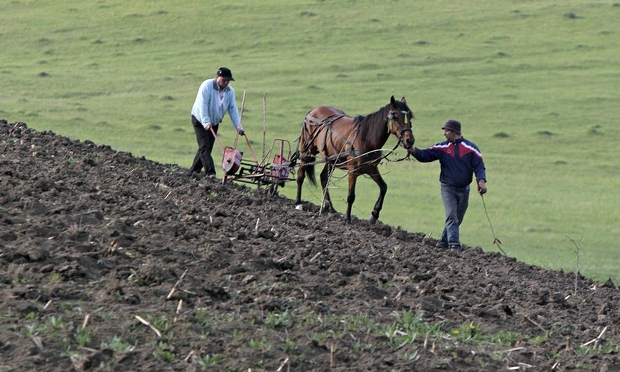Приватизация садового участка: порядок проведения процедуры