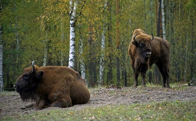 Статистика животных: как популяции влияет на жизнь человека