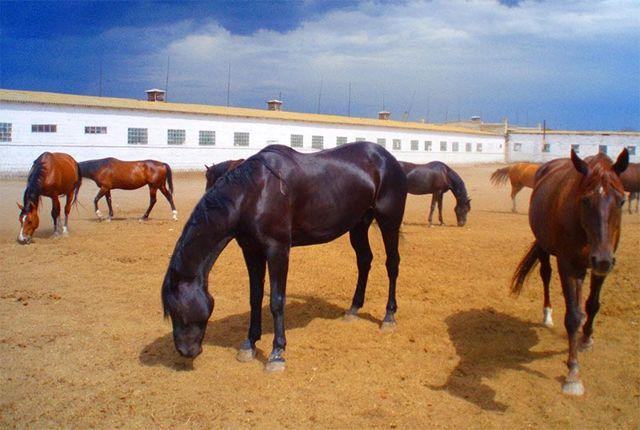 Разведение лошадей: запуск своего бизнеса с нуля