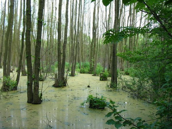 Статистика загрязнений: водные ресурсы, почва, атмосфера