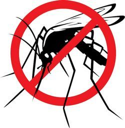 Статистика малярии: симптомы и лечение разных типов болезни