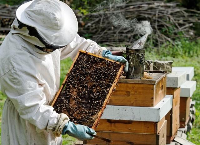 Пчеловодство как бизнес: запуск с нуля и окупаемость вложений