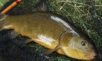 Разведение рыбы в искусственных водоемах: организация бизнеса