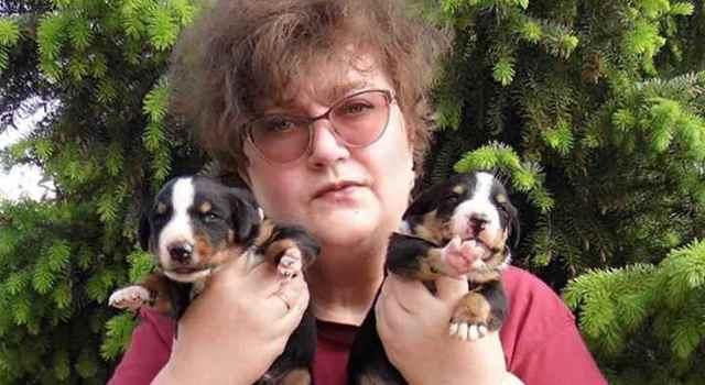 Разведение собак как бизнес для любителей животных