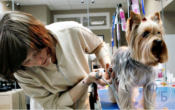 Груминг салон: как заработать на процедурах по уходу за животными